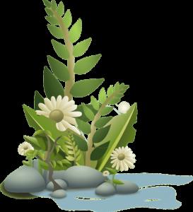 Spirulina: méregtelenítés a természet ajánlásával